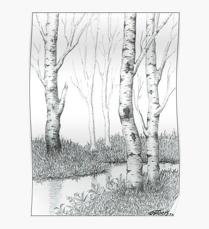 BIRCH TREE 02 Poster