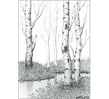 BIRCH TREE 02 Photographic Print