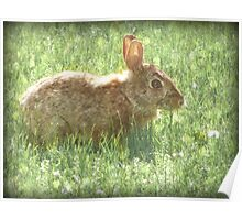 Bunny Rabbit Pencil Sketch nursery decor Poster