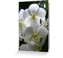 Orchid Beauty in White Greeting Card