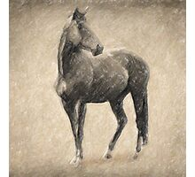 Le Cheval Photographic Print