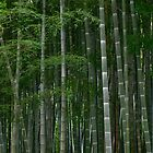 Bamboo-zled by Lisa Taylor
