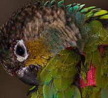 Parrot 2 by John Velocci