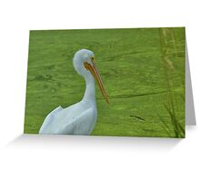 White Crane Greeting Card