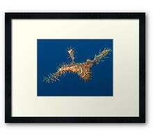 Harlequin ghost pipefish 2 Framed Print