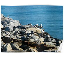 Pelicans on the Rocks Poster