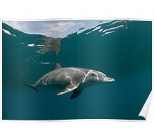 Eye to eye with dolphin Poster