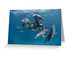Wild-wild dolphins Greeting Card