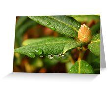 Little Waterdrop Greeting Card