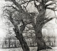Black and White Trees by JulieCoe