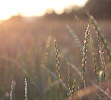 stalks of grain by AbigailJoy