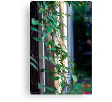 Green leave plant Canvas Print