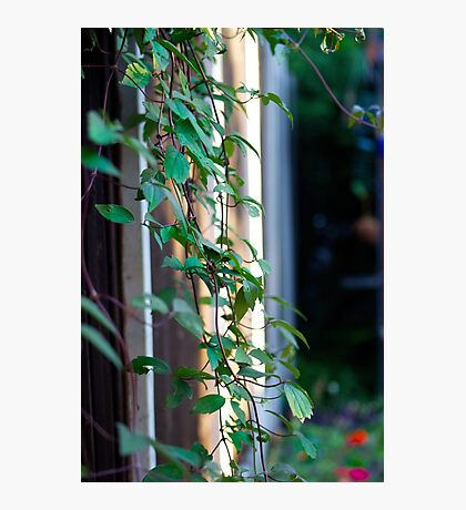 Green leave plant Photographic Print