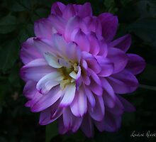 Dahlia by louise reeves
