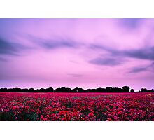 Evening Poppies Photographic Print