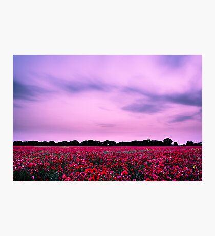 Evening Poppies Photographic Print