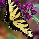 Beautiful Butterfly by Robin D. Overacre