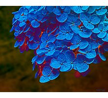 Blue Gold Photographic Print