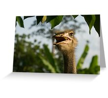 Portrait Of An Opinionated Ostrich  Greeting Card