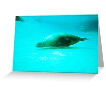Seal -  Aquarium - Melbourne, Vic Greeting Card