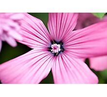Marco Pink Flower Photographic Print