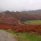 Lake District, autumn walk in the mist by Grace Johnson