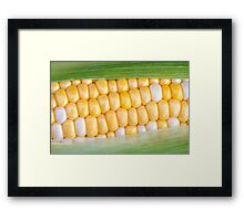 Sweet Corn on the Cob Framed Print