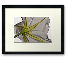 Vanilla Moon - Night Blooming Moon Flower Framed Print