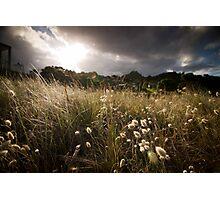 Hahei Hay Field Sunset Photographic Print