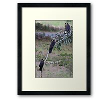 Yellow Tails Framed Print