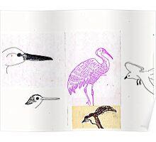 California Bird study 6 Poster