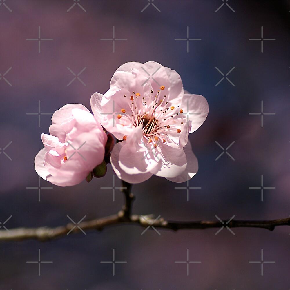 Blossom of PINK by Joy Watson