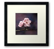 Blossom of PINK Framed Print