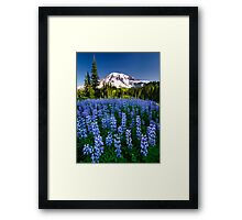 Rainier Wears Blue Framed Print