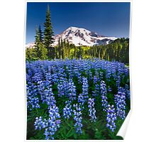 Rainier Wears Blue Poster