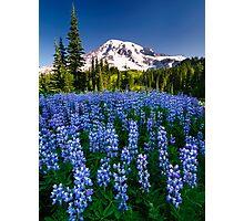 Rainier Wears Blue Photographic Print