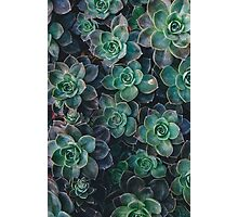 Green Blooming Flowers Photographic Print