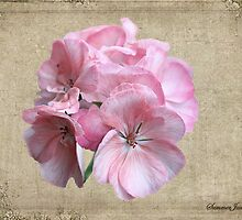 Geranium ~ Grandmother's Favorite by SummerJade