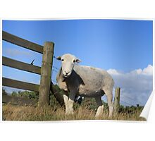 Who Are Ewe Looking At Poster