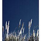 Bluegrass by Philip  Rogan