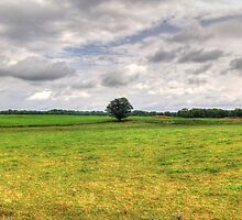 Lone Tree In A Field by James Brotherton