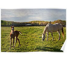 A Mare & her foal Poster