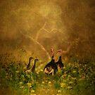 Wild Turkey by swaby