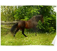 The Canadian Horse - Maple Lane Midnite Rebel Alf Reg. 5303  Poster
