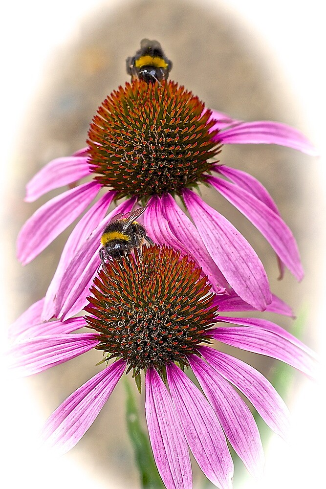 Bee Happy! by John Thurgood
