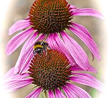 Bee Happy! by John Thurgood