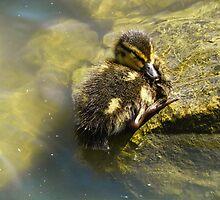 Sleeping Duckling by PineSinger