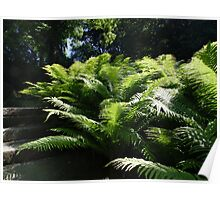 A Farn Plant Poster