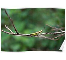 Alien Grasshopper on a branch Poster