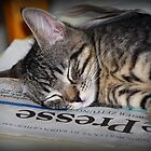 Latest News: Tabby Fell Asleep on Newspaper by karina5